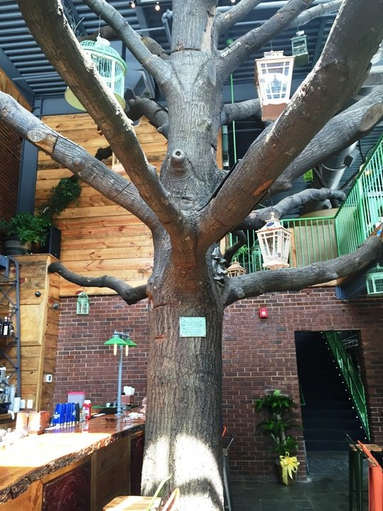 Oak tree installation at Raleigh Beer Garden in Raleigh- NC Triangle Dining