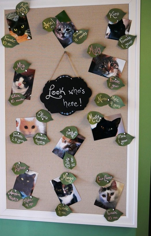 Employees at Cat Tales Cat Cafe in Chapel Hill - nctriangledining.com